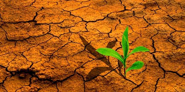 agriculture-et-changement